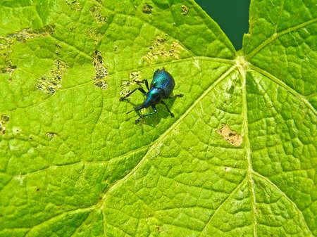 curculionidae: Curculionidae concerns dangerous wreckers of garden trees.