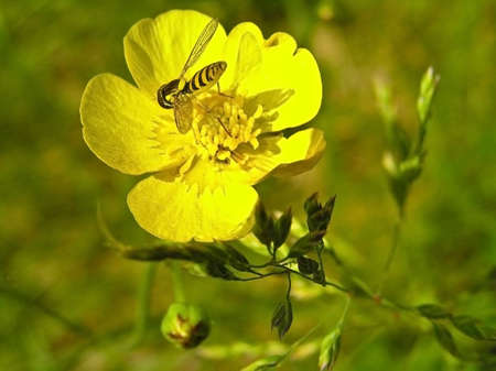 paunch: The insect takes nectar from a flower. Colour of its paunch coincides with colour of petals of a flower. Stock Photo