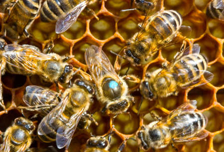 The chapter of bee family is noted by a blue paint. It facilitates his search. Stock Photo