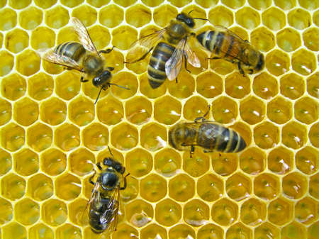 beekeeping: The bees make the nectar into honey. They recruited him into the body and enrich the enzymes.
