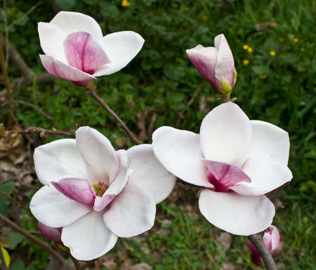 The picture was taken in Kiev Botanical Gardens Фото со стока - 9427275