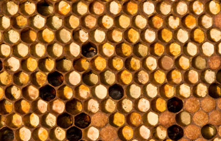 ambrosia: The cells are collected from pollen of flowers. Right-to-bottom - closed in the cells of larvae of the future of bees.