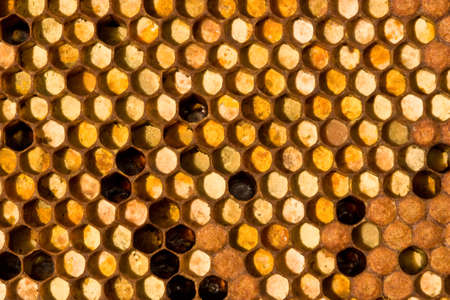 ambrosia: The cells are collected from the pollen of flowers. Left - closed in the cells of larvae of the future of bees Stock Photo