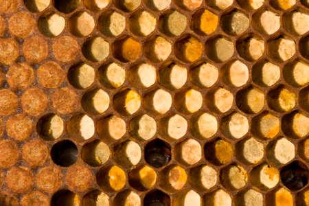 Die Zellen werden aus Pollen von Blumen gesammelt. Linke - in den Zellen der Larven von der Zukunft der Bienen geschlossen Standard-Bild - 9528644