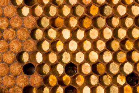 The cells are collected from pollen of flowers. Left - closed in the cells of larvae of the future of bees