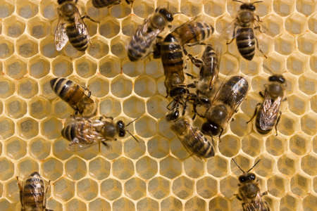 instincts: In the course of communication bees find out their relationship. They divide their roles.