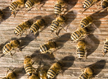 Bees ventilate the hive. In this way they create priemlenie conditions for staying in your home.