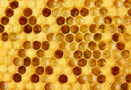 bees: The images show larvae of bees and their future cocoons. Part of hundred empty.