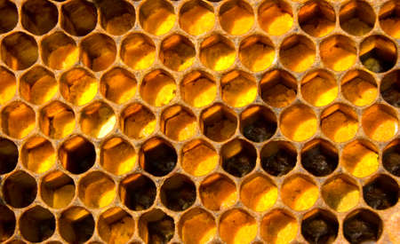 The collected pollen is placed in honeycomb by bees and honey is poured. Pollen and pollen used in alternative medicine. photo