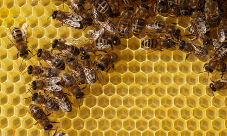 Bees build honeycombs. For this purpose they use the wax they produce.
