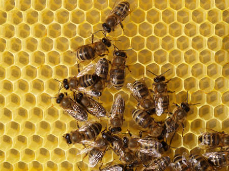 Bees build combs with wax. Interested in their form.