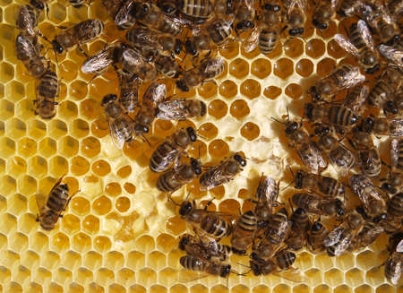 Here we are working to transform the nectar into honey Stock Photo