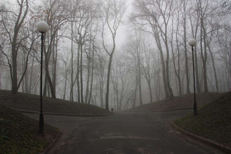 Fog creates the effect of mystery and fairy tales  Taken in the morning