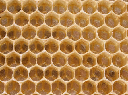 bee queen: Abeja reina en algunos huevos de c�lulas retraso. No es una reproducci�n de las abejas. Foto de archivo