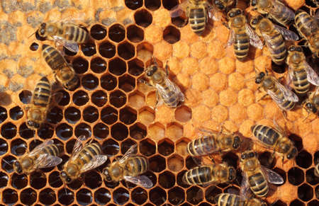 bees: Bees take care of the larvae - their new generation
