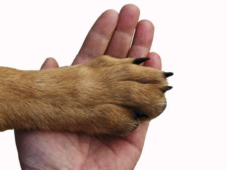 The paw of a dog lies in a hand of the person  The dog trusts photo