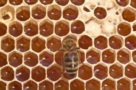 convert: Bees convert nectar into honey