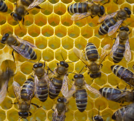 instinct: In cells placed nectar bees, honey and pollen. Stock Photo