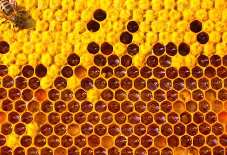 colmena: El cuidado de la abeja por larvas.