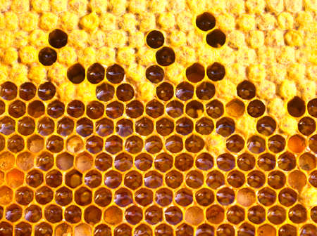 larvae: In cells are the larvae of the future of bees, honey, nectar and pollen.