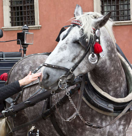 horse collar: Horse-drawn carriage used to transport people. Stock Photo