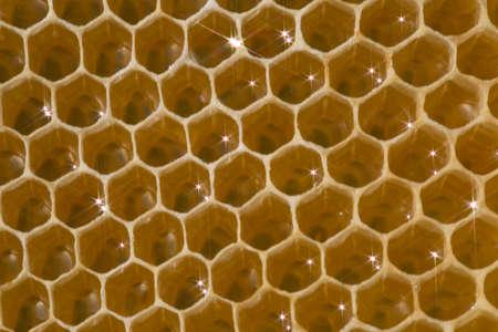 abejas panal: Abejas Honeycomb producen cera. En ellas se ponen de néctar, la miel y el polen. La abeja reina pone los huevos en ellos.