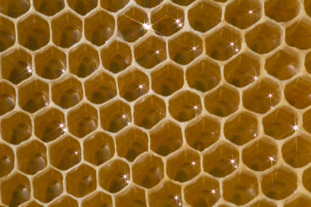 Honeycomb bees produce wax. In them they put nectar, honey and pollen. The queen bee lays eggs in them. Stock Photo