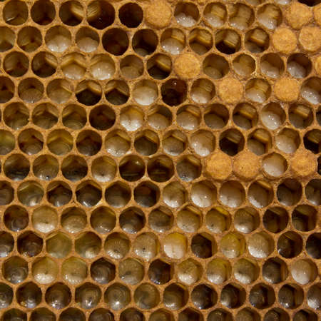new age: Images show larvae of bees of all ages.