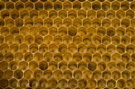 entomology: Honeycombs are developing larvae of bees future generation of beneficial insects.