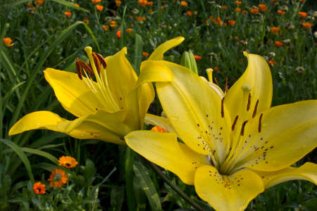 vibrations: Lily in the rays of the evening sun.