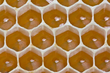 Bees nectar poured into new comb to convert it into honey.