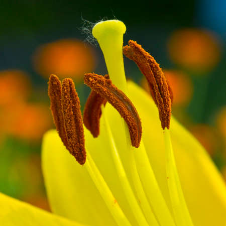 the stamens: Reproductive organs of a flower - a pistil and stamens.