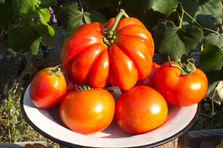 grades: Tomatoes of different grades lie on a plate.