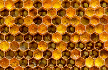 Bee pollen is filled with honey. This forms a pollen. Standard-Bild