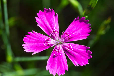 Small flowers studs grow colonies. Sometimes they form a beautiful backdrop. Stock Photo