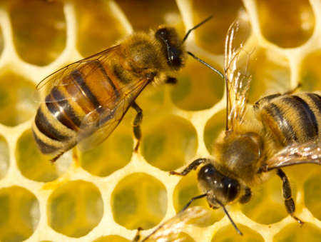 build in: Bees build honeycombs. They work in a team.