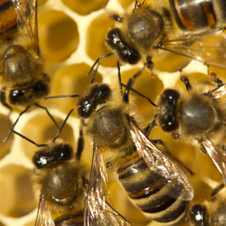 Active work of bees. They work in a team.