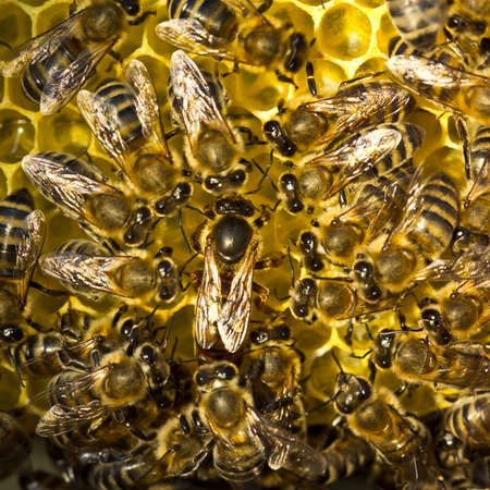 Queen Bee and bees