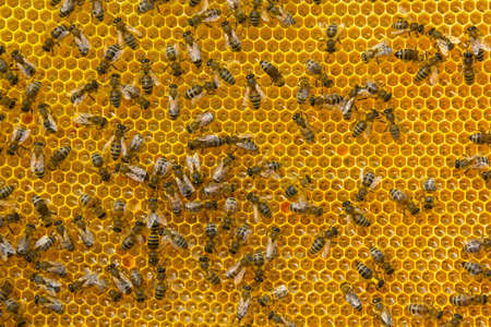 Brought from nectar of flowers into honey bees transform.
