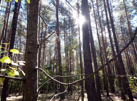 The suns rays penetrate the square of the treetops and illuminate what grows in the forest. Stock Photo