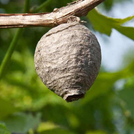 An einem abgelegenen Ort wird ein Wohnplatz für Ihre Nestwespen gebaut.