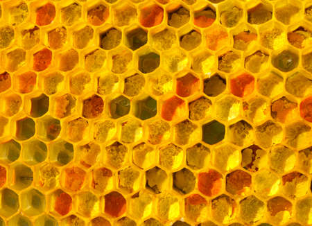 There is no optical noise and aberration. This pollen and wax have a fine-grained structure.