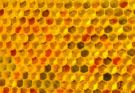There is no optical noise and aberration. This pollen and wax have a fine-grained structure. The color of pollen depends on how it is taken from the flowers. Banco de Imagens