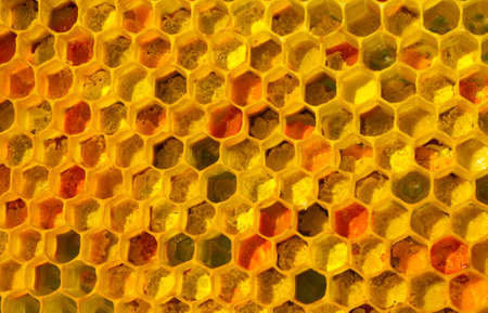 There is no optical noise and aberration. This pollen and wax have a fine-grained structure.The color of pollen depends on how it is taken from the flowers.