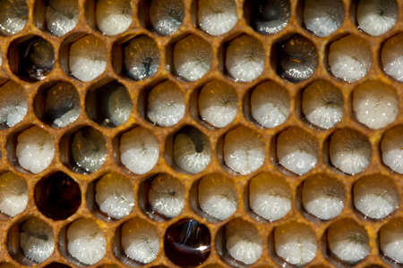 Honeycombs are developing larvae of bees – future generation of beneficial insects.