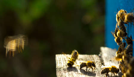 Guard bees do not let strangers into your hive of bees. Even destroy them.