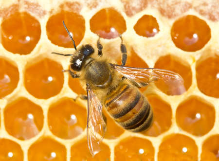 So is healthy food - honey. Throught from nectar of flowers into honey bees transform.