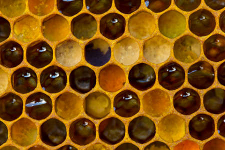 The color of pollen depends on how it is taken from the flowers.