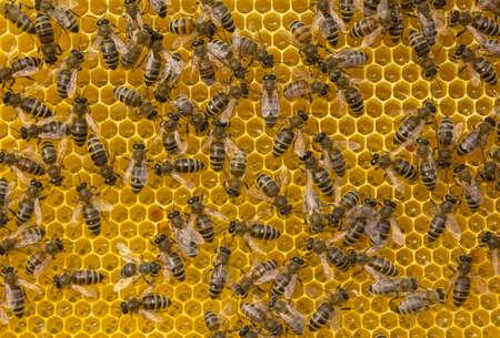 Bees are busy working. They convert nectar to honey. Standard-Bild