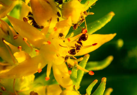 Aphids develop on young leaves, stems and inside flowers.